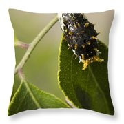 Crawling For Food Throw Pillow