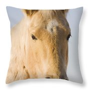 Cream Coloured Horse Head Looking Throw Pillow