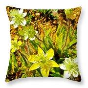 Cream Cups In Antelope Valley California Poppy Reserve-california  Throw Pillow