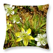 Cream Cups In Antelope Valley California Poppy Reserve Near Lancaster-california  Throw Pillow
