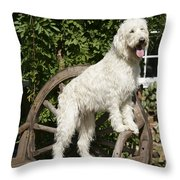 Cream Labradoodle On Wooden Chair Throw Pillow