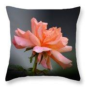 Creamy Peach Rose Throw Pillow