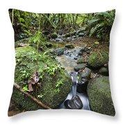 Creek In Mountain Rainforest Costa Rica Throw Pillow