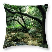 Creek In Woods Throw Pillow by Kathy Yates