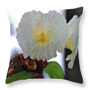 Crepe Ginger Costus Speciosus Throw Pillow