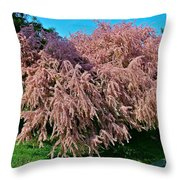 Crepey Myrtle Tree In Istanbul-turkey Throw Pillow
