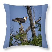 Crested Caracara Throw Pillow
