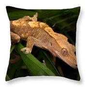 Crested Gecko Rhacodactylus Ciliatus Throw Pillow