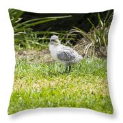 Crested Tern Chick - Montague Island - Australia Throw Pillow