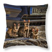 Cretan Cats-1 Throw Pillow