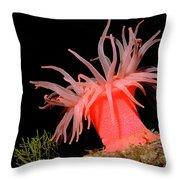 Crimson Anemone Cribrinopsis Fernaldi Throw Pillow