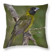 Crimson-collared Grosbeak Throw Pillow