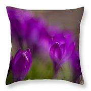 Crocus Purple Haze Throw Pillow
