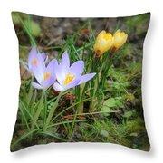 Crocuses In Bloom Throw Pillow