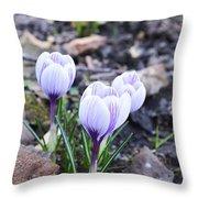 Crocuses Love Again Throw Pillow