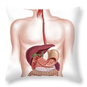 Cross Section Of Human Digestive System Throw Pillow by Leonello Calvetti