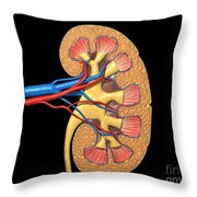 Cross Section Of Human Kidney On Black Throw Pillow