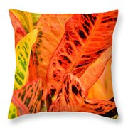 Croton's Many Colors Throw Pillow