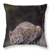 Crouching Bobcat Montana Wildlife Throw Pillow