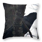 Crow Eye Throw Pillow