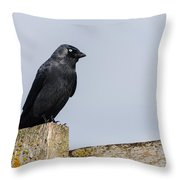Crow Perched On A Fence Throw Pillow