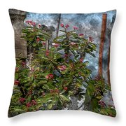Crown Of Thorns - Featured In Beauty Captured And Nature Photography Groups Throw Pillow