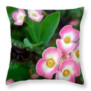Crown Of Thorns Flower Throw Pillow