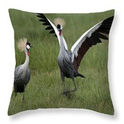 Crowned Cane Courtship Display Throw Pillow