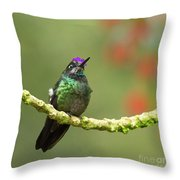 Crowned Hummingbird Throw Pillow