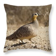 Crowned Sandgrouse Pterocles Coronatus Throw Pillow