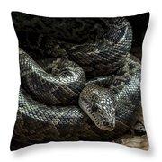 Cuban Boa Throw Pillow