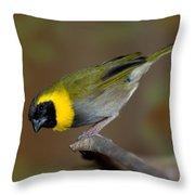 Cuban Melodius Finch Throw Pillow