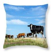 Curious Bull Throw Pillow