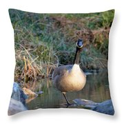 Curious Canadian Goose Throw Pillow