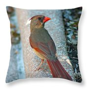 Curious Cardinal Throw Pillow