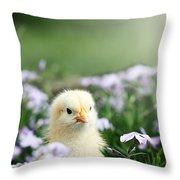 Curious Chick Throw Pillow
