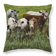 Curious Cows Throw Pillow