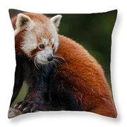 Curious Critter Throw Pillow