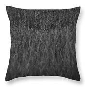 Curious Deer Throw Pillow