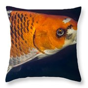 Curious Koi Throw Pillow