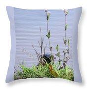 Curious Otter Throw Pillow