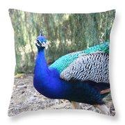 Curious Peacock Throw Pillow