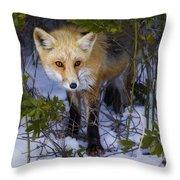 Curious Red Fox Throw Pillow