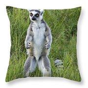 Curious Ring-tail Throw Pillow