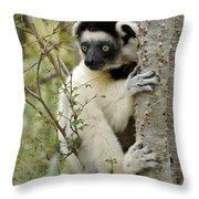 Curious Sifaka 2 Throw Pillow