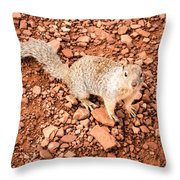 Curious Squirrel 2 Throw Pillow