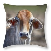 Curious V5 Throw Pillow