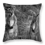 Curious Wallabies Throw Pillow