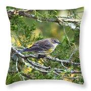 Curious Warbler Throw Pillow