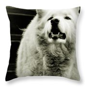 Curious Wolf Breed Throw Pillow